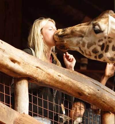 Giraffe_smooch