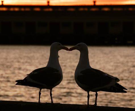 Evening_kiss